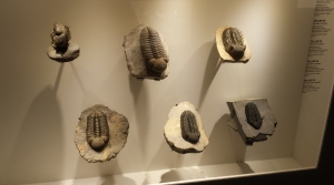 TRILOBYTES are EVERYWHERE!!